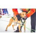 Névé SC - Collier pour chien