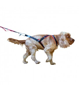 Inlandsis Open-Back - Canicross & Dog Sledding Harness